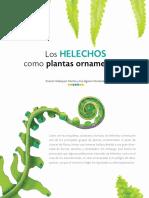Los Helechos Como Plantas Ornamentales