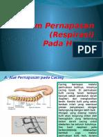 Sistem Pernapasan (Respirasi).pptx