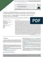 Šošić-Jurjević et al Acta Histochemica 2016.pdf