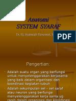 Sytem Saraf Anatomi