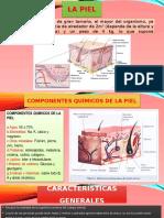 Anatomia y Fisiologia de La Piel Expo 2 Parcial Anatomia Fierro Vecilla