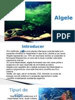 Alge 1