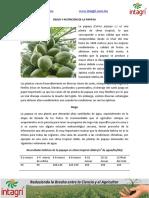 03. Riego y Nutricion de La Papaya