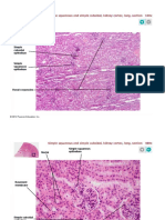 pal3 histology epithelial tissue lbl ppt