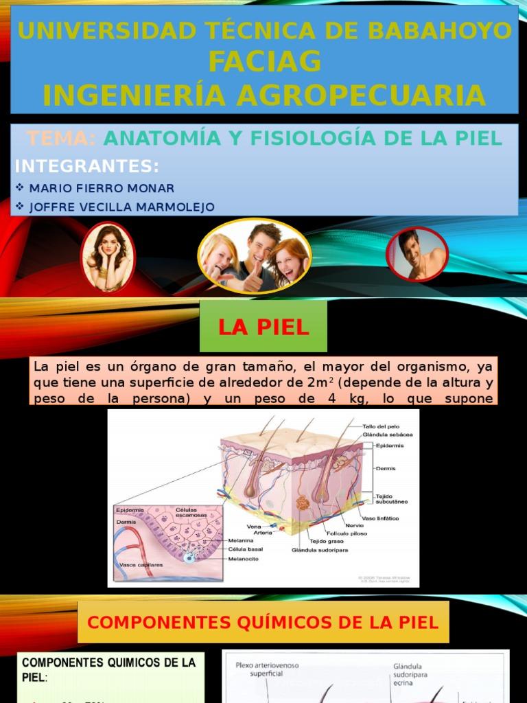 Anatomia y Fisiologia piel