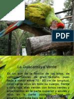 La Guacamaya Verde.pptx