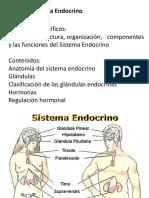 Sistema Endocrino TENS