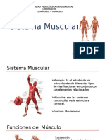 Sistema Muscular Javier Delgado