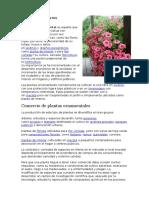 Las Plantas Ornamentales