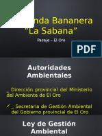 Bananera La Sabana