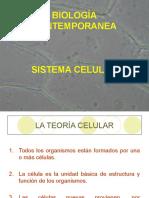 Sistema  Celular