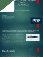 Thysanoptera-1