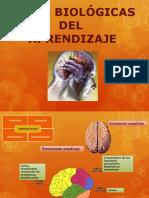 BASES BIOLOGICAS DEL APRENDIZAJE 1.pptx