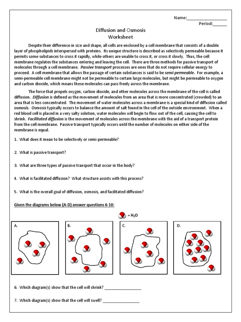 Worksheets Diffusion And Osmosis Worksheet Answers osmosis cell membrane osmosis
