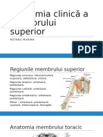 Anatomia Clinica a Membrului Superior Prezentare