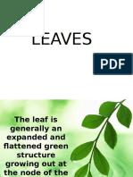 Botany Lab Leaves