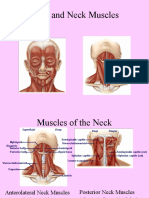 A - It 15 - 6 - Muscle of Head and Neck - Mba