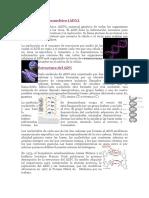 ADN (Ácido desoxirribonucleico).docx