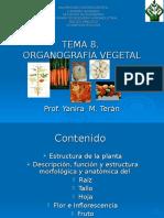 Tema 8.Organografía Vegetal 2008