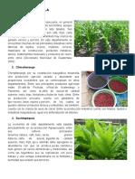 Cultivos de Guatemala