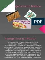 Transgénicos en México
