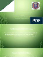 GINECOLOGIA OBSTETRICIA