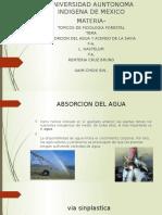 Absorcion Del Agua y Ascenso de La Savia