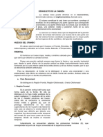 Osteologia del craneo