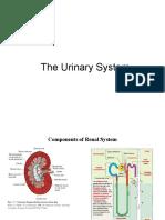 11-Urine