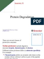 27 Protease