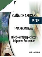 1 GENETICA CAÑA DE AZÚCAR.pdf