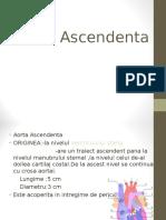 Aorta Ascendenta
