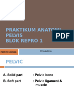 Praktikum Anatomi Repro Pelvis