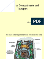 Molecular Bio Lecture 12