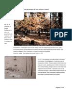 DibujoII-Parte6.pdf