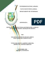 TESIS Estructuras Anatomicas de Iguana Verde Nicaragua
