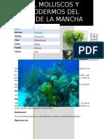 Algas Reporte