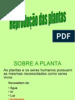 propagação vegetativa.ppt