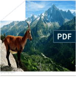 Mountain Goat.docx