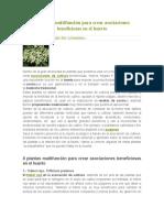 8 Plantas Multifunción Para Crear Asociaciones Beneficiosas en El Huerto