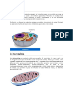 Citoplasma, Mitocondrias