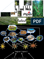 rain forest food web