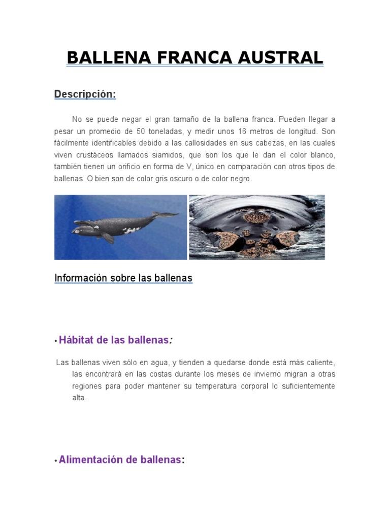 Ballena Franca Naturaleza Sicología Y Ciencia Cognitiva