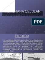 8.- Membrana plasmtica