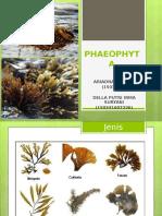 Phaeophyta Kel 2