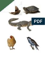 haiwan_pembiakan_habitat.pptx