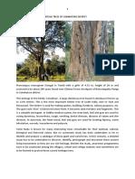Heritage Trees of Coimbatore District