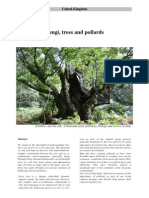 Fungi, trees and pollards