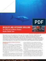Wildlife and Offshore Drilling Atlantic Bluefin Tuna