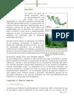 Informacion recursos Forestales